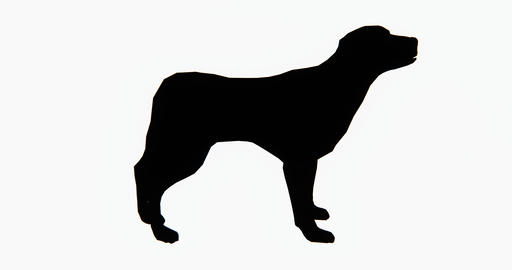 4k dog,3d cartoon,lovely pet,animal silhouette Footage