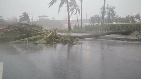Debri and fallen trees in Typhoon Souledor, Taiwan, August 2015 Footage