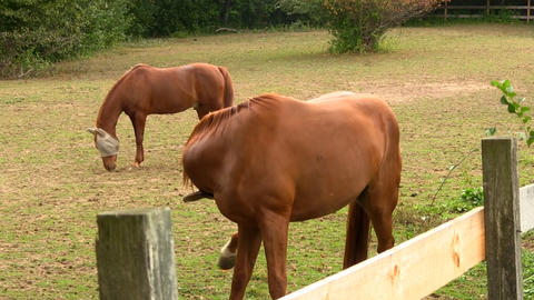 Grazing At Ranch 3 stock footage