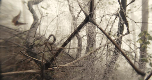Through The Spider Web On The Branch Of A Tree Misty Spring Forest Seen Close Up stock footage