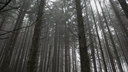 Misty Forest stock footage