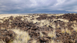 Lava Field Desert With Dry Grass stock footage