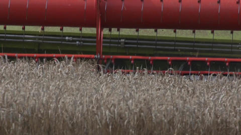 Detail Of A Combine Harvester Harvesting Wheat stock footage