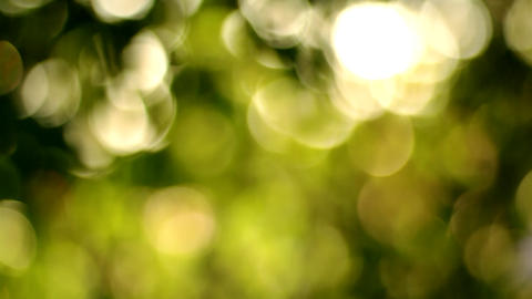 Beautiful Bokeh Shot Through Floral Foliage With Silky Smooth Slow Tilt stock footage