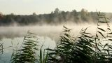 Misty Morning stock footage