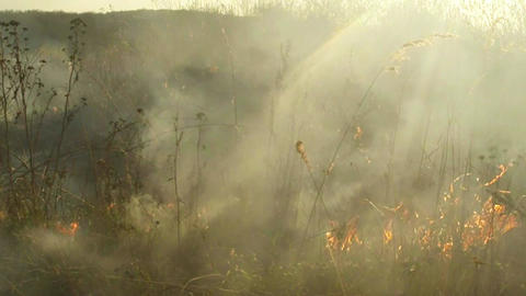 Sun Shines Through The Smoke And Fire, Burning Dry Grass And Bushes In Early Spr stock footage