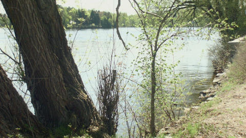 Quiet Lakeside Bright Sunny Day Tree In Foreground stock footage