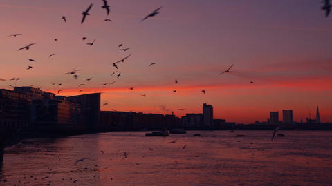 Sunset and a Flock of Seaguls Footage