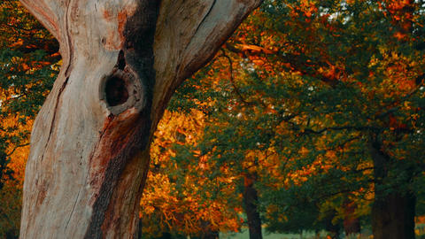 Dead Tree Bark in Autumnal Park Footage