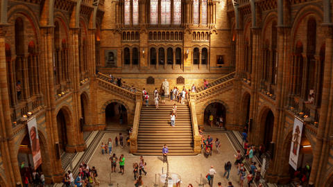 Natural History Museum Indoor Timelapse Footage