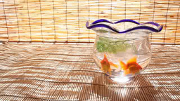 Goldfish In A Fishbowl stock footage