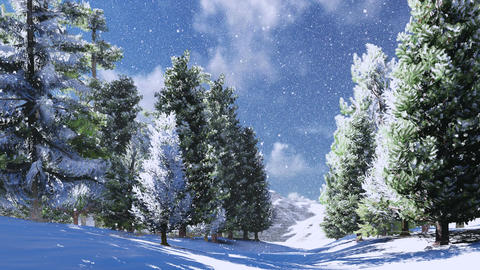 Snowy Pine Wood In The Mountains At Sunny Day stock footage