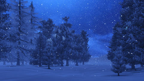 Pine forest at magic winter night Footage
