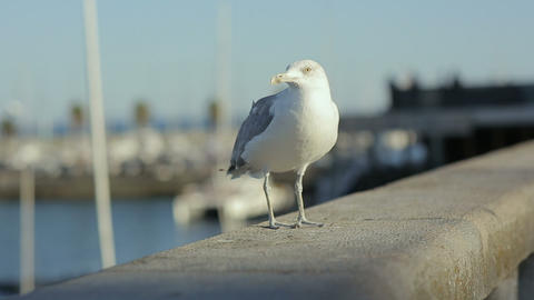 Sea gull starts fly from embankment portugal lisbon rivera ocean marina Footage