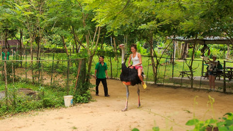 girl tourist rides on ostrich along path in tourist park Footage