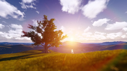 Tree Sunrise Among Mountains stock footage