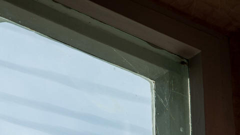 Moth In The Web On The Window stock footage