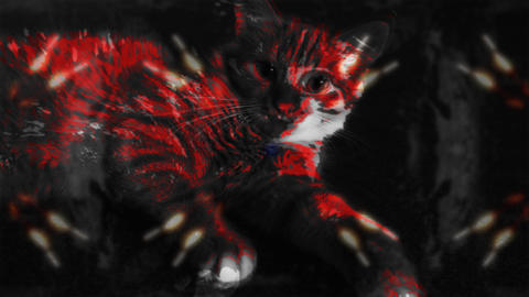 Red cat with kaleidoscopic BG Footage