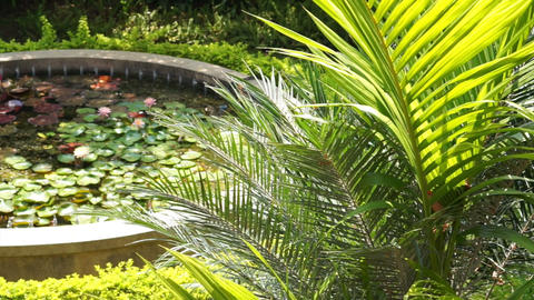lush tropical garden with lotus pond Footage