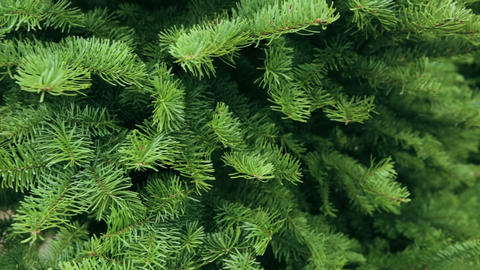 Christmas Tree Farm stock footage