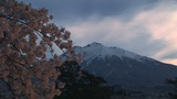 Cherry Tree And Mountain stock footage
