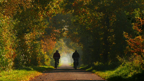 retired couple riding bicycle on long colorful avenue in autumn 4k 11777 Footage