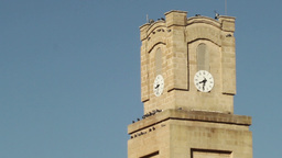 Pigeons On The Clock Tower In The Italian City stock footage